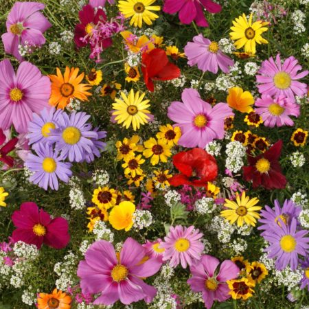 Annuals for Sun Seed Mix