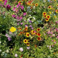 Annuals for Sun Mixture
