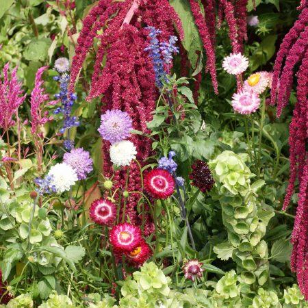 Everlasting Flower Mixture