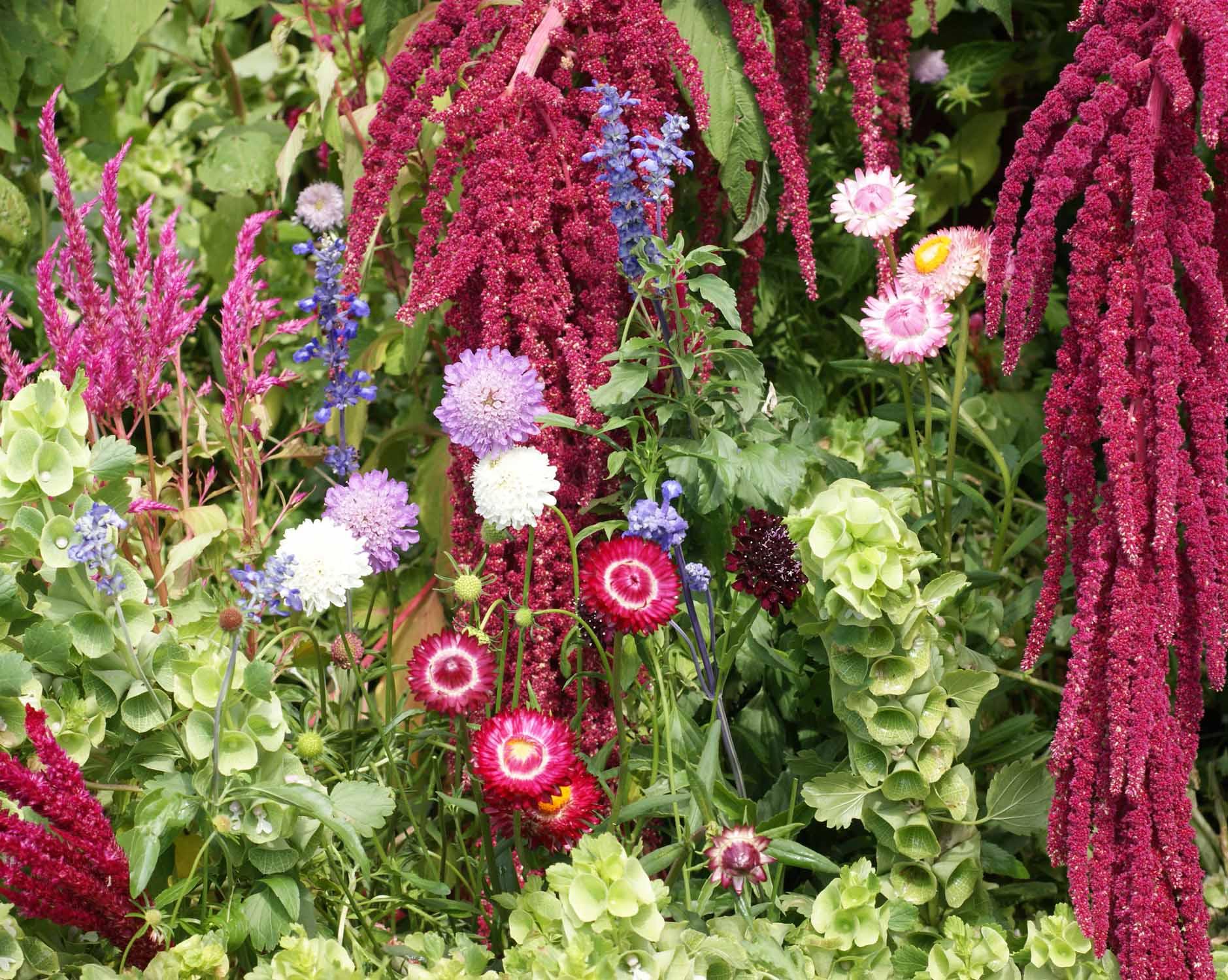 Everlasting Flower Seed Mixtureapplewood Seed Company