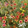 Eastern Xeriscape Mix