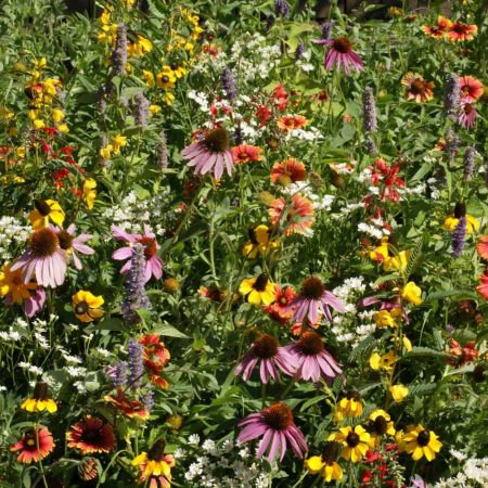 Xeriscape Seed Mix for the Eastern U.S.