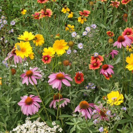 Honey Bee Seed mix