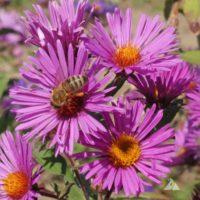 Honey bee seed mix