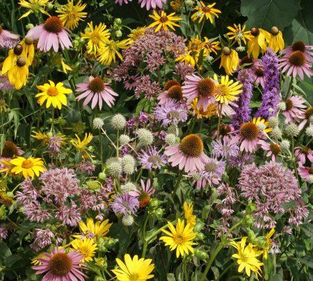Tall Prairie Flower Mixture