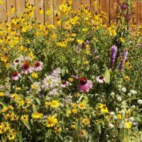 Tall Prairie Flower Mix