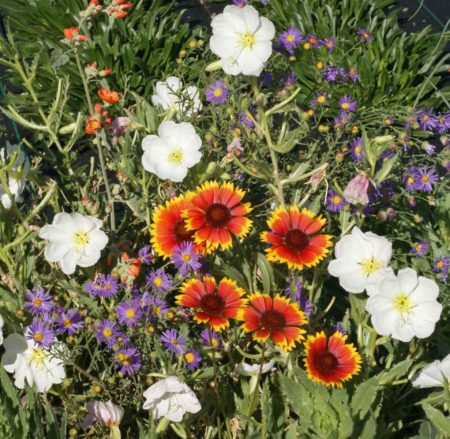 Xeriscape Mixture for the Western U.S.