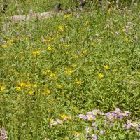 High Mountain Pollinator Mix