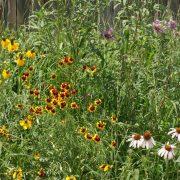 High Plains Pollinator Seed Mix