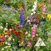 Annuals for Sun Mix