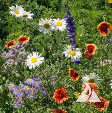 Regional Wildflower Seed Mixtures