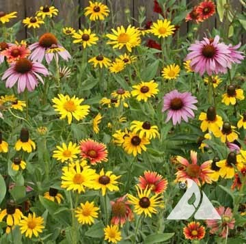 Midwest Native Wildflower Mix