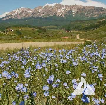 Regional Native Wildflower Seed Mixes
