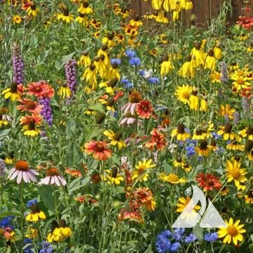 Midwest Wildflower Mix