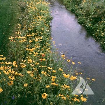 Wet Meadow Mixture