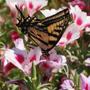Mixtures for Monarchs and Other Butterflies