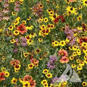 Eastern Pollinator seed mixture