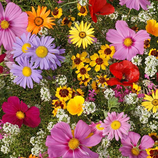Flower Seed Mixes