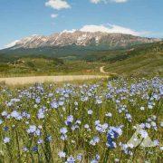 Foothills Pollinator Mix