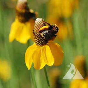 High Plains Pollinator Mix