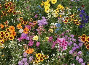 Golf Flower Seed Mix