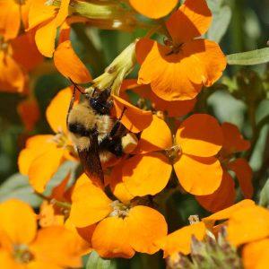 Bumblebee Buffet Mix