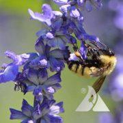 Bumblebee Buffet Mixture