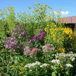 Forage for Bees from Wet Meadow Seed Mixture