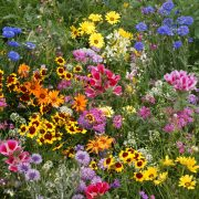 Low Growing Seed Mix
