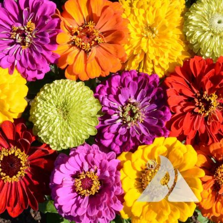 Painted Wagons Zinnia Mix
